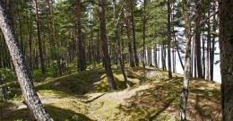 Novads apsaimnieko meža īpašumus